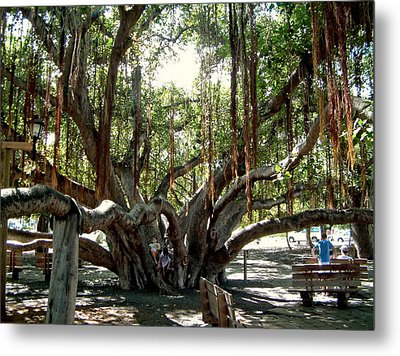 Metal Print featuring the photograph Maui Banyan Tree Park by Rob Green