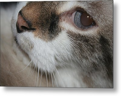 Metal Print featuring the photograph Max - Up Close And Personal by Lou Belcher