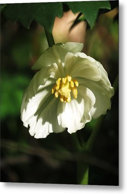 Metal Print featuring the photograph Mayapple Blossom by Rebecca Overton