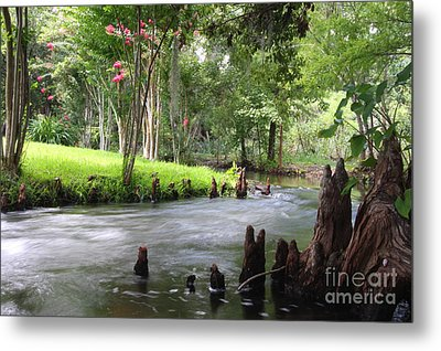 Mead Gardens Metal Print by Jennifer Zelik