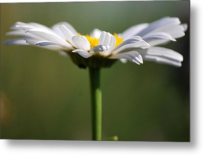 Meadow Pedals Metal Print