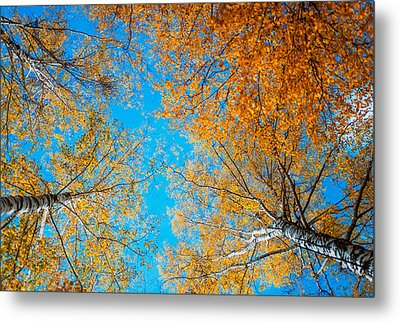 Meet In Heaven. Autumn Glory Metal Print by Jenny Rainbow