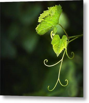 Memories Of Green Metal Print by Evelina Kremsdorf