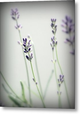 Metal Print featuring the photograph Memories Of Provence by Brooke T Ryan