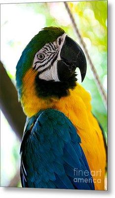 Mexican Parrot Metal Print by Natalia Babanova