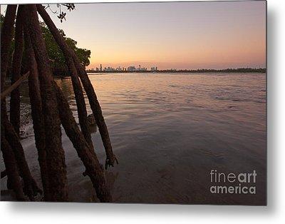 Miami And Mangroves Metal Print by Matt Tilghman