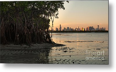 Miami With Mangroves Metal Print by Matt Tilghman