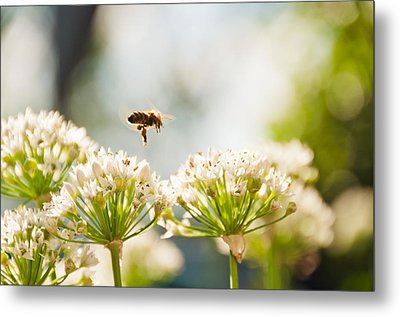 Metal Print featuring the photograph Mid-pollenation by Cheryl Baxter