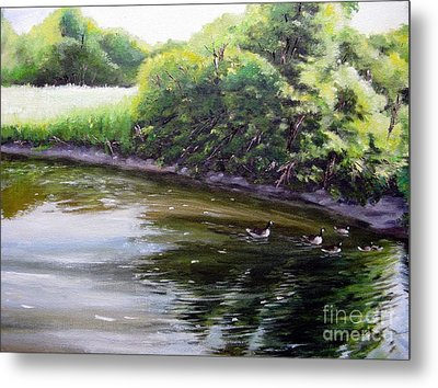 Mid Summer Day Canada Geese Metal Print by Ronald Tseng