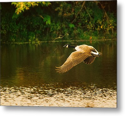 Midmorning Launch Metal Print by Susan Capuano