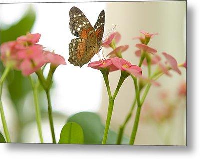 Milkweed Butterfly Metal Print by MaryJane Armstrong