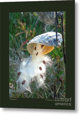 Milkweed-i Metal Print by Patricia Overmoyer