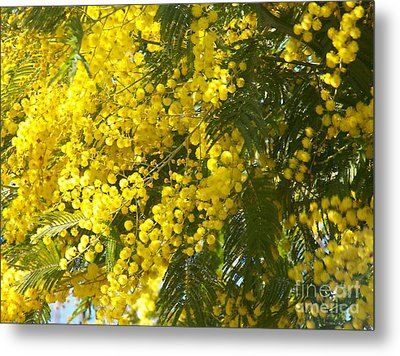 Metal Print featuring the photograph Mimosas by Sylvie Leandre