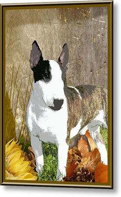 Minature Bull Terrier Metal Print by One Rude Dawg Orcutt