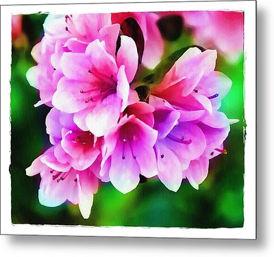 Metal Print featuring the photograph Miniature Azaleas by Judi Bagwell