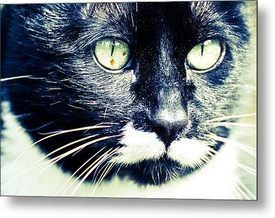 Metal Print featuring the photograph Minnie by Ronda Broatch