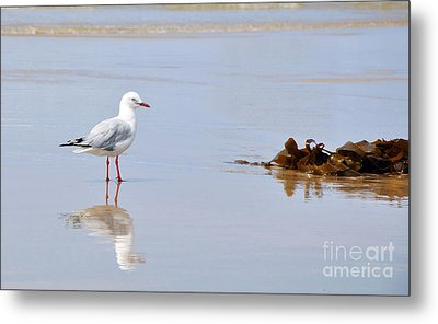 Mirrored Seagull Metal Print by Kaye Menner