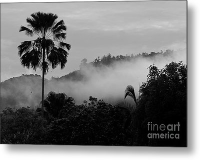 Mist Od Dawn.  Metal Print by Gary Bridger