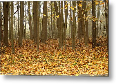 Misty Wood Metal Print by Cathy Kovarik