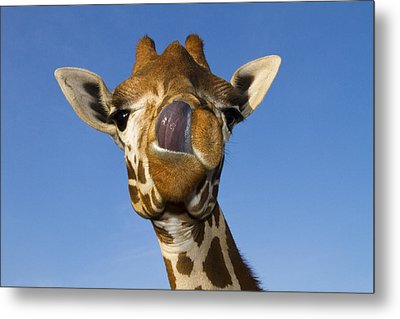 Metal Print featuring the photograph Mmmm Mmmmm Good by Carrie Cranwill