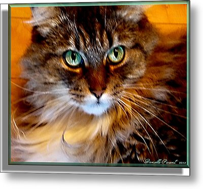 Molly Metal Print by Danielle  Parent