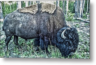 Molting Bison In Yellowstone Metal Print by Gregory Dyer