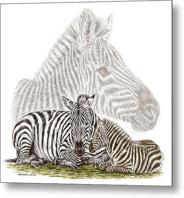 Metal Print featuring the drawing Mom And Baby Zebra Art by Kelli Swan