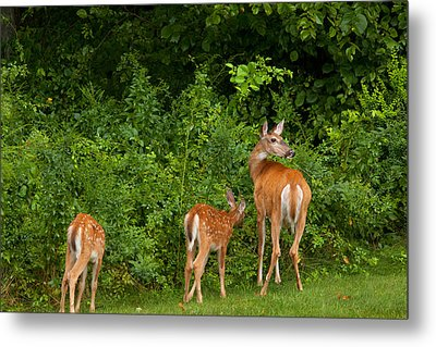 Mom And Two Metal Print by Karol Livote