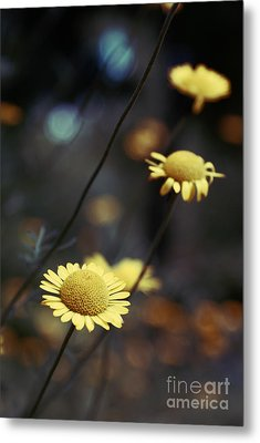 Momentum 01-02a Metal Print by Variance Collections