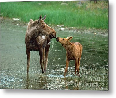 Mommy And Me Metal Print by Doug Herr