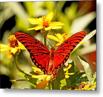 Metal Print featuring the photograph Monarch Butterfly  by Luana K Perez