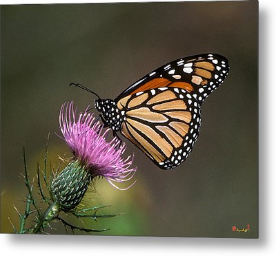 Metal Print featuring the photograph Monarch Butterfly On Thistle 13a by Gerry Gantt
