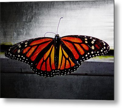 Metal Print featuring the photograph Monarch by Julia Wilcox