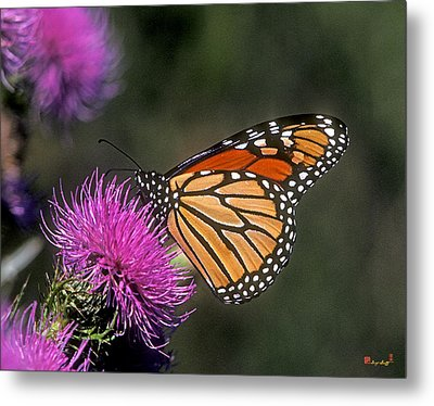 Metal Print featuring the photograph Monarch On Thistle 13f by Gerry Gantt