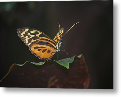 Monarch Perch Metal Print