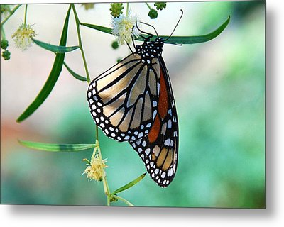 Metal Print featuring the photograph Monarch by Tam Ryan