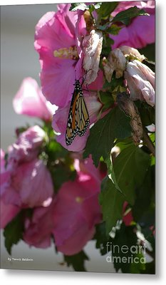 Metal Print featuring the photograph Monarch by Tannis  Baldwin