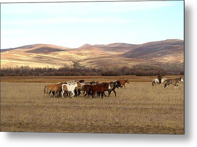 Mongolian Horses Metal Print by Diane Height