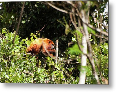Monkey In The Trees Metal Print