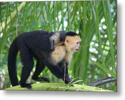 Monkey On My Back Metal Print by Debra     Vatalaro