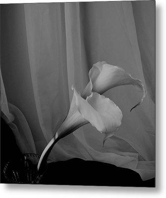 Monochrome Calla Lilies Metal Print