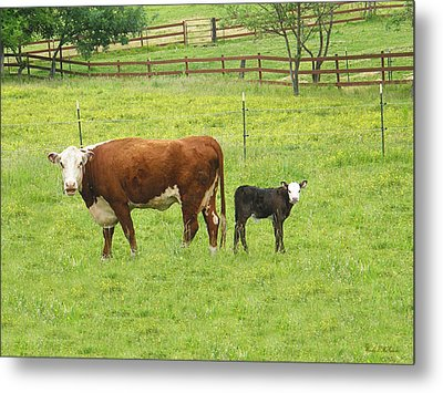 Mooma And Calf Metal Print by Wendy McKennon