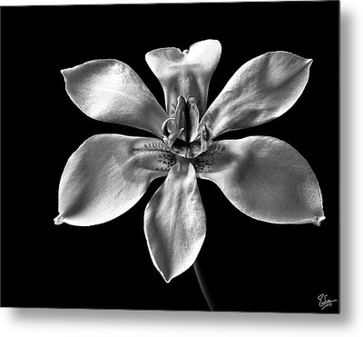 Metal Print featuring the photograph Morea In Black And White by Endre Balogh