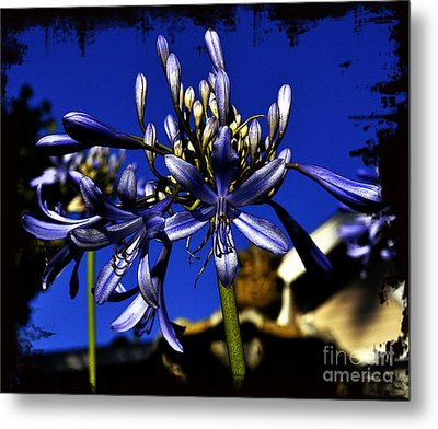 Metal Print featuring the photograph Morning Blooms by Clayton Bruster