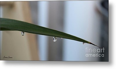 Morning Dew 2 Metal Print by Lorraine Louwerse