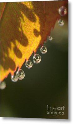 Morning Dew Drops Metal Print