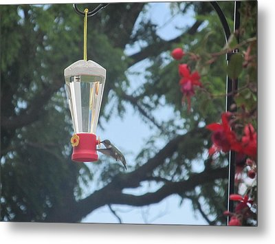 Metal Print featuring the photograph Morning Feed by Tina M Wenger