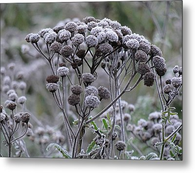 Metal Print featuring the photograph Morning Frost by Tiffany Erdman