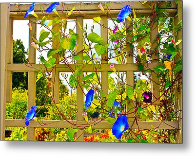 Metal Print featuring the photograph Morning Glory  by Ann Murphy
