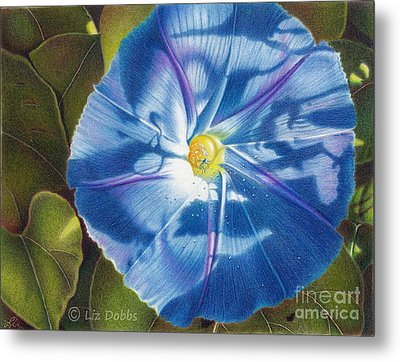 Morning Glory B Metal Print by Elizabeth Dobbs